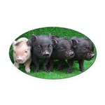 4 micro pigs in a row Oval Car Magnet