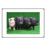 4 micro pigs in a row Banner