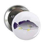 Freshwater Drum fish (aka Sheephead) 2.25