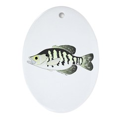 White Crappie sunfish fish Ornament (Oval)