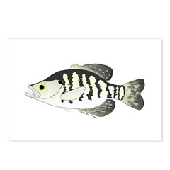 White Crappie sunfish fish Postcards (Package of 8
