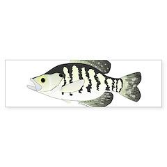 White Crappie sunfish fish Bumper Bumper Sticker
