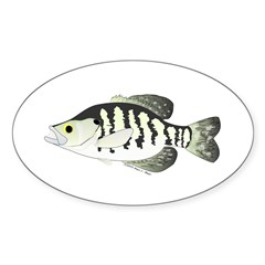 White Crappie sunfish fish Decal