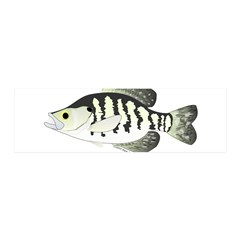 White Crappie sunfish fish Wall Decal