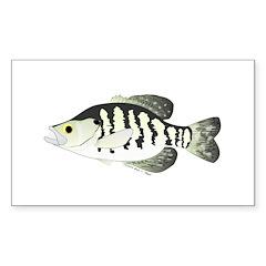White Crappie sunfish fish Decal