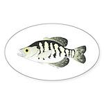 White Crappie sunfish fish Sticker