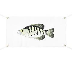 White Crappie sunfish fish Banner