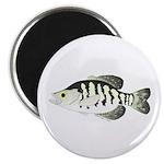 White Crappie sunfish fish Magnet