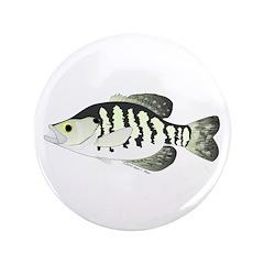 White Crappie sunfish fish 3.5