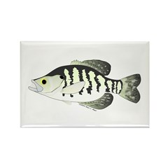 White Crappie sunfish fish Rectangle Magnet (10 pa