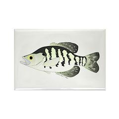 White Crappie sunfish fish Rectangle Magnet