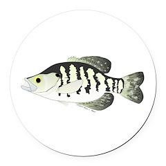 White Crappie sunfish fish Round Car Magnet