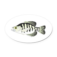 White Crappie sunfish fish Oval Car Magnet