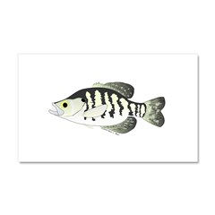 White Crappie sunfish fish Car Magnet 20 x 12