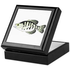 White Crappie sunfish fish Keepsake Box