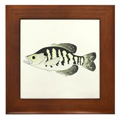 White Crappie sunfish fish Framed Tile