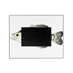 White Crappie sunfish fish Picture Frame