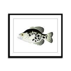 Black Crappie Sunfish fish Framed Panel Print
