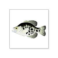 Black Crappie Sunfish fish Sticker