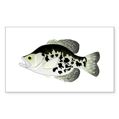 Black Crappie Sunfish fish Decal