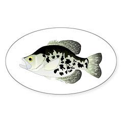 Black Crappie Sunfish fish Decal