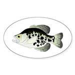 Black Crappie Sunfish fish Sticker