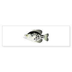 Black Crappie Sunfish fish Bumper Bumper Sticker