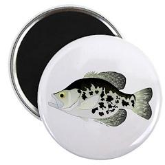 Black Crappie Sunfish fish 2.25