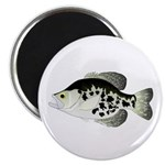 Black Crappie Sunfish fish Magnet