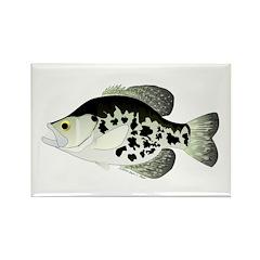 Black Crappie Sunfish fish Rectangle Magnet (10 pa