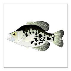 Black Crappie Sunfish fish Square Car Magnet 3