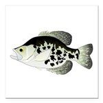 Black Crappie Sunfish fish Square Car Magnet 3