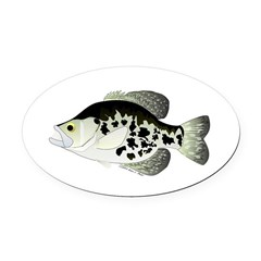 Black Crappie Sunfish fish Oval Car Magnet