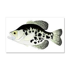 Black Crappie Sunfish fish Car Magnet 20 x 12