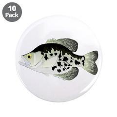Black Crappie Sunfish fish 3.5