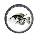 Black Crappie Sunfish fish Wall Clock