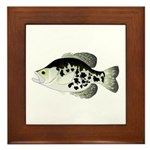 Black Crappie Sunfish fish Framed Tile