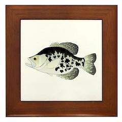 Black Crappie Sunfish fish Framed Tile