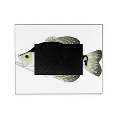 Black Crappie Sunfish fish Picture Frame