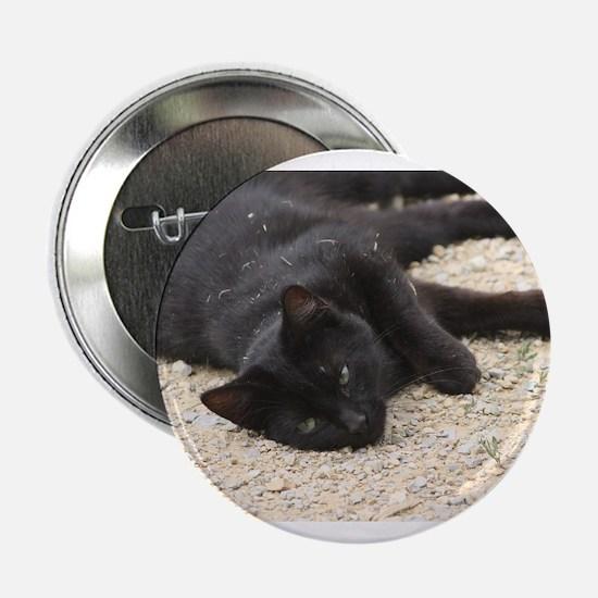 "cat 2.25"" Button"