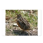 Snipe Bird Postcards (Package of 8)