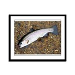 Taneycomo Rainbow Trout PS Framed Panel Print