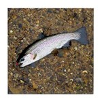 Taneycomo Rainbow Trout PS Tile Coaster