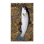 Taneycomo Rainbow Trout PS 3'x5' Area Rug