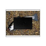 Taneycomo Rainbow Trout PS Picture Frame