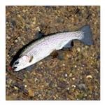 Taneycomo Rainbow Trout PS Square Car Magnet 3