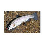 Taneycomo Rainbow Trout PS Rectangle Car Magnet