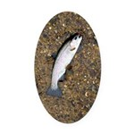 Taneycomo Rainbow Trout PS Oval Car Magnet