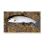 Taneycomo Rainbow Trout PS Car Magnet 20 x 12