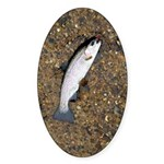 Taneycomo Rainbow Trout PS Sticker